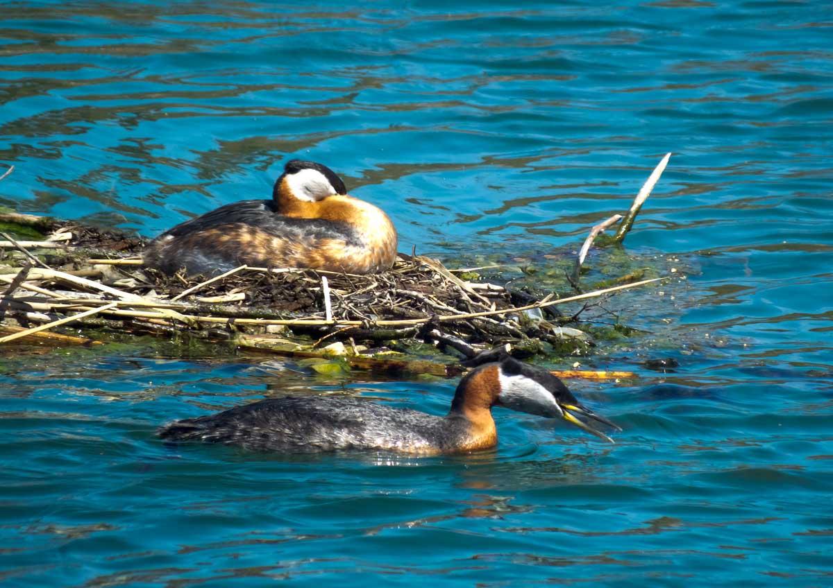 mère et père sur l'eau