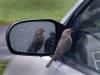 Spring chatter bird