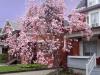 Magnolia at home May