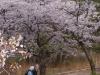 Spring day in HighPark 10-31-17